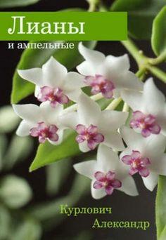 Лианы и ампельные. Александр Курлович