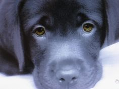 Separation Anxiety in Dogs. Some easy, helpful tips on working with dogs that have separation anxiety.
