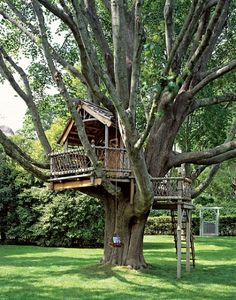 This has ALWAYS been the desire of my heart!  A Swiss Family Robinson type house.