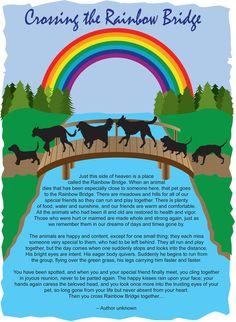 crossing the rainbow bridge poem - Google Search