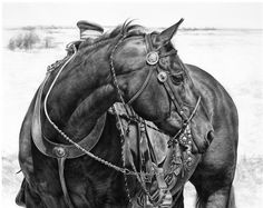Karmel Timmons: Equestrian Art In Pencil: Ready to Work What an AMAZING drawing.it looks like a photograph! Horse Pencil Drawing, Horse Drawings, Animal Drawings, Art Drawings, Pencil Art, Drawing Animals, Pencil Drawings, Horse Artwork, Horse Paintings