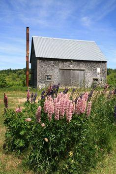 Pink Perennials, Old Barns, Nova Scotia, Cabin, House Styles, Garden, Decor, Garten, Decoration