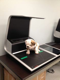 Meet 8-week old Hank, Crowley's newest office mate and our official Zeutschel zeta book scanner mascot. These units are already selling quickly, but we think Hank could be a secret weapon.
