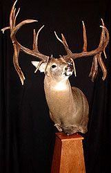 Whitetail Deer Pictures, Deer Photos, Deer Pics, Deer Mounts, Fish Mounts, Big Whitetail Bucks, Alaska, Deer Farm, Hunting Magazines