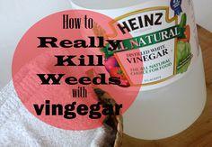 Vinegar Weed Killer - the REAL WAY to use vinegar!