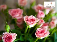 LAS MEJORES FLORES A DOMICILIO. En Lilium, sabemos que las flores deben ser tratadas con delicadeza, por ello, contamos con centros de enfriamiento e hidratación en grandes bodegas, así logramos prolongar la vida de las flores y mantenerlas en buenas condiciones hasta el momento en que sean entregadas. Le invitamos a conocer más sobre nuestro trabajo en www.lilium.mx