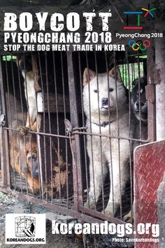 It's about time we had some new posters for our Boycott Pyeongchang Campaign.   Check out the new Boycott Pyeongchang 2018 posters our volunteer created for us and please post them as many places as possible.  http://koreandogs.org/boycott-pyeongchang-2018-posters/ 	 Let's post them and send as a message to the below Olympic Committee and the sponsors.