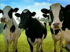 LOL -- A North Dakota or CANADIAN cow -- hahahah.   Great milk comes from Happy Cows. Happy Cows come from California!