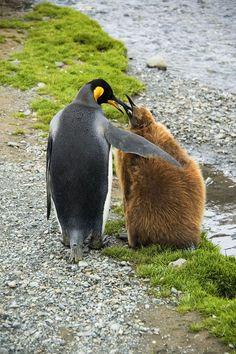 "[King Penguin Mom and Kid] * * KID: "" If yoo gotz nuthin' and me gotz nuthin', den we both haz nuthin' and be de same ! """