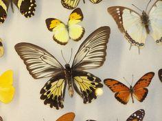 N.O. Insectarium