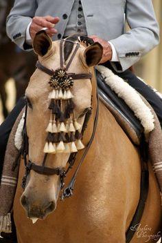 Cute Horses, Beautiful Horses, Pretty Horses, Horse Gear, Horse Tack, Rare Horse Breeds, Horse Pictures, Horse Photos, Horse Costumes