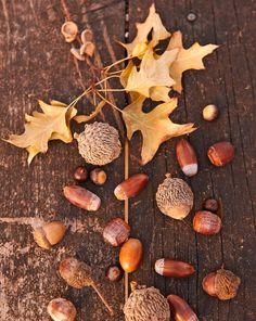 How to grow an oak tree from an acorn: http://www.lowescreativeideas.com/idea-library/projects/Grow_Oak_Trees_from_Acorns_0811.aspx