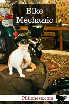 Our biker cats love motorcycles almost as much as we do. There's always a motorcycle cat hard at work around here. Freedom Riders, Cat Love, Biker, Motorcycles, Garage, Cats, Funny, Animals, Fictional Characters