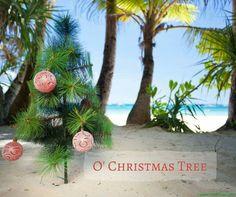 Tropical Christmas, Christmas Tree, Coastal, Plants, Teal Christmas Tree, Xmas Trees, Plant, Christmas Trees, Xmas Tree