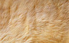 Animal fur texture Di Siji 9841