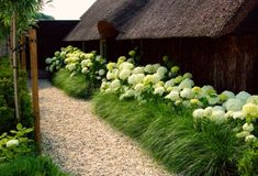 Hydrangeas And Ornamental Grasses Landscaping. You can create a natural fences with hydrangeas combined with ornamental grasses. Hydrangea Landscaping, Front Yard Landscaping, Landscaping Ideas, Landscaping With Grasses, Landscaping Borders, Landscaping Software, Garden Borders, Landscaping Melbourne, Privacy Landscaping