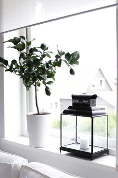 In my window / MITT VITA HUS
