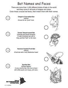 Bat Names and Faces Activity - Bat Conservation International Bat Activities For Kids, Bat Conservation International, Punk Looks, Animal Adaptations, Science Ideas, Bats, Social Studies, Teaching Ideas, Wildlife