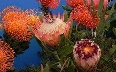 Trópusi virágok Madeirán