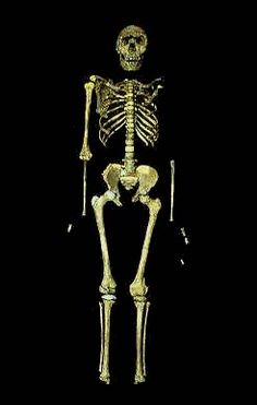 Turkana Boy- Homo Ergaster, son of Homo Erectus Africanus, father of Homo Heidelbergensis, Cro-magnon and Neanderthal.  Thought to live 1.8 -1.3 million years ago. Developed tools from Oldawan to Acheulean. Brother of the Asian Homo Erectus line.