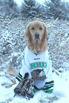 our team wears black and orange would look good on a Golden/Yellow Lab too :) Hockey Live, Hockey Girls, Hockey Mom, Hockey Goalie, Ice Hockey, Fighting Sioux, Sports Trophies, Hockey Pictures, Wild Dogs