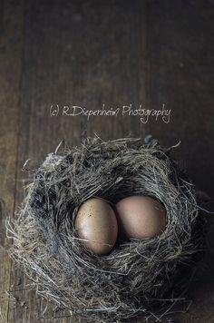 https://flic.kr/p/vfH915 | 2 eggs in nest
