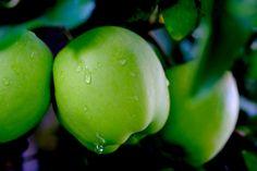 Garden, Apple, Rain, Fruit, Drip, Wet, Raindrop #garden, #apple, #rain, #fruit, #drip, #wet, #raindrop