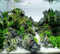 scaper's tank contest. 1st place. Sakura Temple.  Swee Lim Cheah