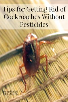 Tips for Getting Rid of Cockroaches Without Pesticides, including homemade roach bait, natural roach repellents, and cleaning tips.