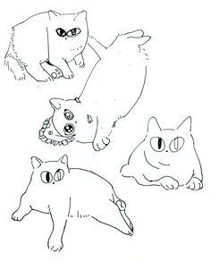 2016 고양이 모찌