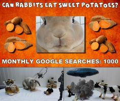 Bunbun the rabbit looks at sweet potatoes as a rabbit food in this video. Rabbit Diet, Rabbit Eating, Rabbit Food, Rabbit Treats, Apple Seeds, Meals For One, Funny Animal, Rabbits, Sweet Potato