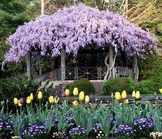 Backyard pergola cov Beautiful