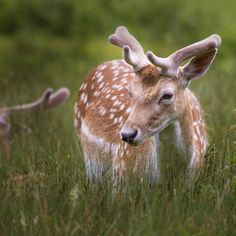 Deer - trees forest flower animals tree summer beautiful grass animal green wildlife day deer outdoors wild color image bambi