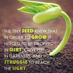 Seeds, quotes
