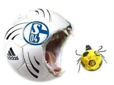 Fresst sie auf die Zecken! Soccer Ball, Fc 04, Humor, Sports, Ticks, Blue, Hs Sports, European Football, Humour
