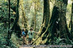 Amazing Australian hikes ~ Binnaburra in the Tweed Valley and part of the Lamington National Park.  Beautiful rainforest and for the most part, gentle walking