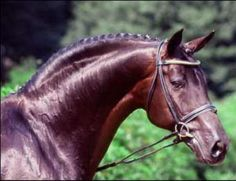 Rubenstein I -- one of the top three sires of the century (dressage horses)