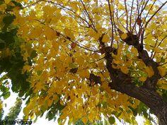 Del otoño aprendi que aunque las hojas caigan el arbol sigue de pie...