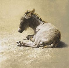 Siesta - Mexican burro by Michael Dumas, oil