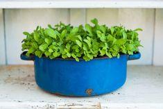 12 Pflanzen, die auf dem Fensterbrett gedeihen (auch im Winter) - Plantura