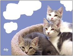 #126- Three Darling Kittens. Have...  Like, Pin and Share :]