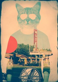 Collage ि◦ी  cool cat by Ali GULEC