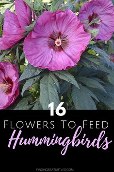 Attract Hummingbirds to Your Garden! 16 Perennials for Hungry Perennials for Hungry HummingbirdsPerennials That Attract Hummingbirds to Your Garden! 16 Perennials for Hungry Perennials for Hungry Hummingbirds Aquilegia Clementine Red Low maintenan Flowers That Attract Hummingbirds, Flowers Perennials, White Flower Farm, Easy Landscaping, How To Attract Hummingbirds, Perennials, Garden Planning, Day Lilies, Perennial Garden