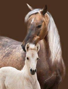 Chocolate Palomino Mare & her Foal