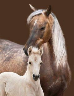 Chocolate Palomino Mare & her Foal