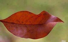 Leaf Lip by Charles Perkins  #Photo #Leaf