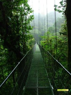 Monteverde  Costa Rica... Can't wait to see THIS!!!!  Great fun ... walking above the green canopy close to the trees and all it's inhabitants. Love Costa Rica....Pura Vida.