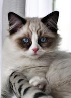 Animals, Factory Farming, Pets, Gatos, Animales, Animaux, Animal, Animais
