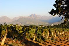 #Simonsig_Estate Nordic Walking, Wineries, South Africa, Holland, Cape, Places To Go, Coastal, Ocean, History