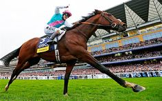 What's amazing about Frankel is that he has this extraordinary ability to run a mile in under just two minutes.   He ran his final race in 2012, but his legacy lives on as many will remember him as the grand-daddy of all race horses in British history!  Checkout some more legendary horses:  http://central.parellinaturalhorsetraining.com/2013/08/the-wonder-of-the-horse-seven-great-horses-from-throughout-history-2/